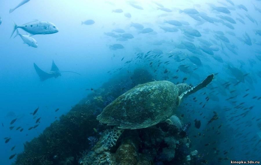 смотреть онлайн фильм документальный фильм океаны